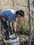 Instructor Chris Chisholm gathers the tasty Rhizomes from a Cattail pond.