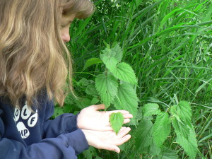 Kim Chisholm showing the characteristic heart shape and serrate edges of a stinging nettle leaf.