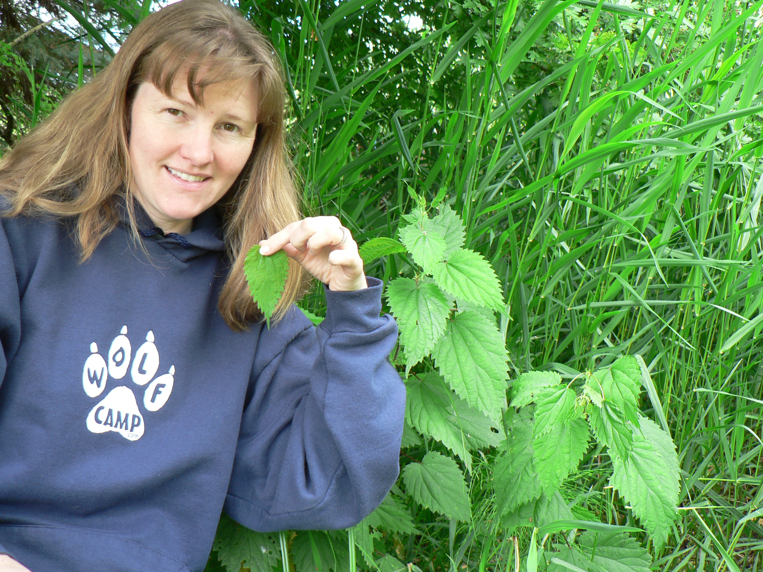 Stinging Nettle:  Harvesting, Processing and Recipes