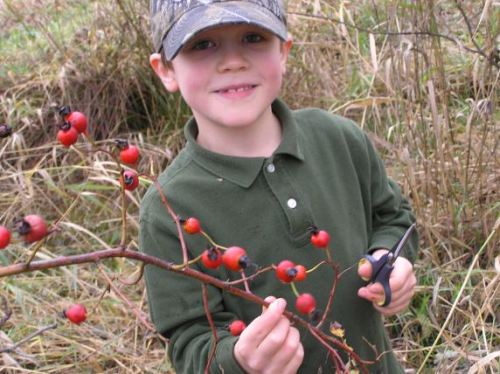 Hunter of Rose Hips at Wolf Camp