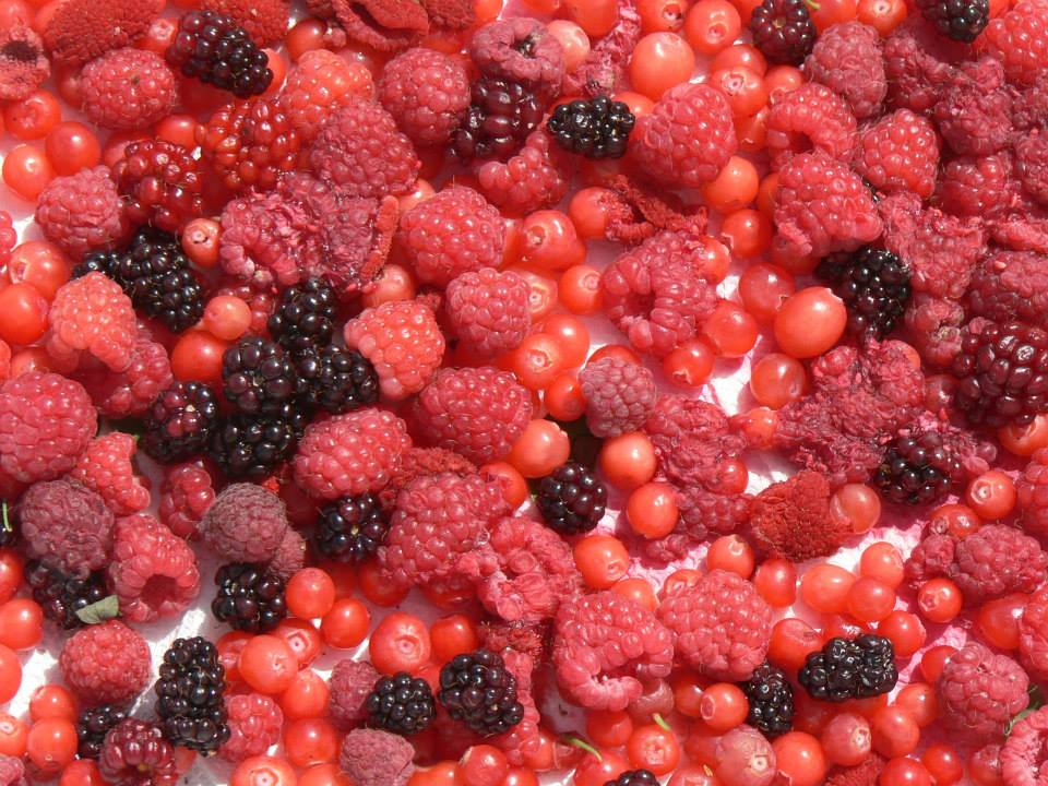 Wild Harvested Berries