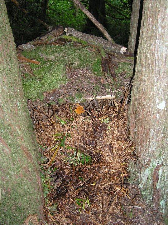 Debris Hut