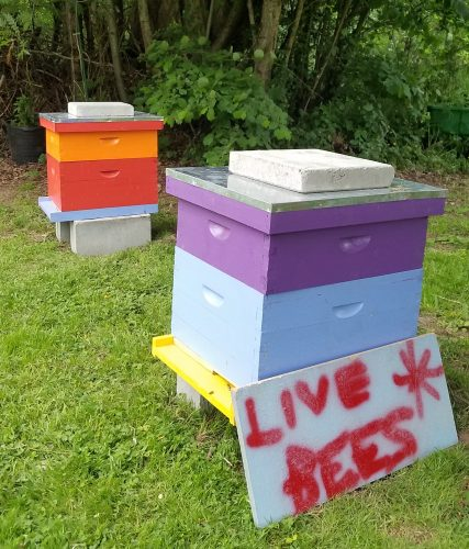 Day 35: HONEY BEES arrive at Blue Skye Farm!