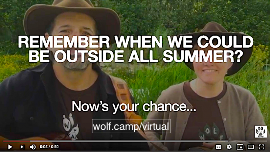 The Original STEAM Educational Experience - Online Wolf Camps & Academic Year Programs